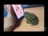 Жаба и палец))) прикол!!!